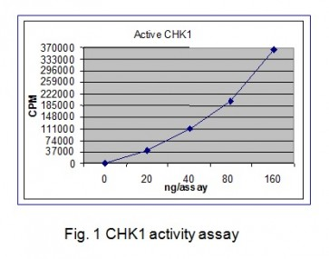 CHK1, Active