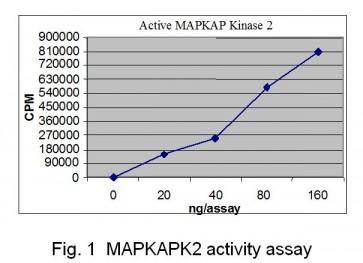 MAPKAPK2, Active
