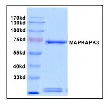 MAPKAPK3, Active