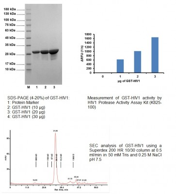 Active HIV1 Protease Recombinant (GST-tagged)