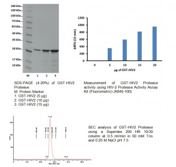Active HIV-2 Protease Recombinant (GST-tagged)