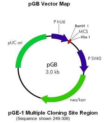 pGB Caspase-8 siRNA Vector