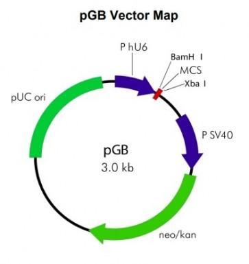 pGB BAX siRNA Vector Mix