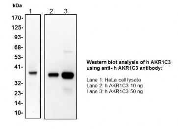 AKR1C3 Polyclonal Antibody