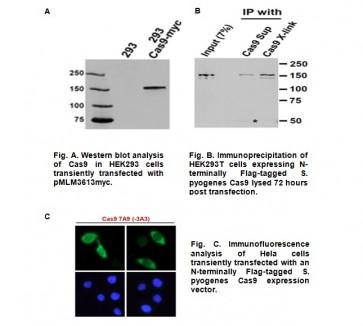Anti-Cas9 Antibody (7A9)