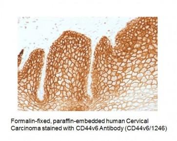 Anti-CD44v6 Antibody (Clone CD44v6/1246)