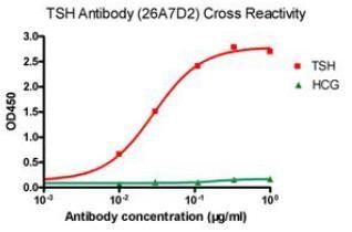 Anti-TSH Antibody (26A7D2)