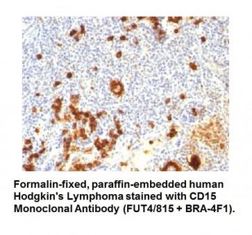 Anti-CD15 / FUT4 Antibody (FUT4/815 + BRA-4F1)