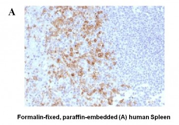 Anti-CD162 Antibody (PSGL1/1601)