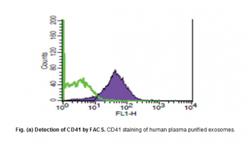Anti-human CD41 Antibody