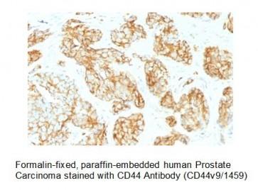 Anti-CD44v9 Antibody (Clone CD44v9/1459)