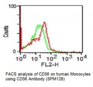 Anti-CD56 / NCAM1 Antibody (Clone SPM128)