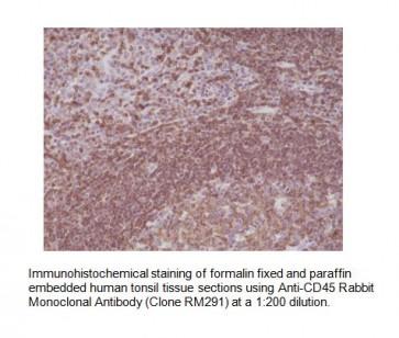 Anti-CD45 Rabbit Monoclonal Antibody