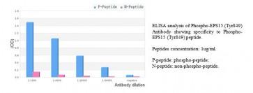 Phospho-EPS15 (Tyr849) Antibody