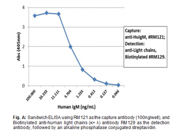 Anti-Human IgM, Rabbit Monoclonal Antibody