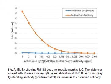 Anti-Human IgG2, Rabbit Monoclonal Antibody
