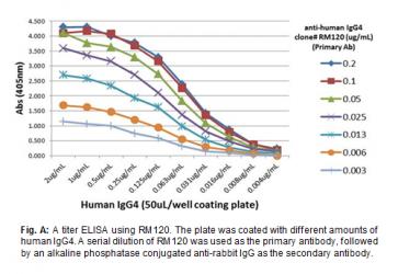 Anti-Human IgG4, Rabbit Monoclonal Antibody