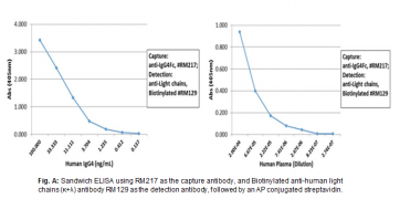 Anti-Human IgG4 Fc, Rabbit Monoclonal Antibody