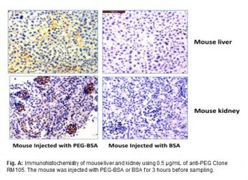 Anti-PEG, Rabbit Monoclonal Antibody