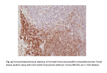 Anti-CD4 Rabbit Monoclonal Antibody (RM345)
