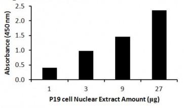 Oct4 (Human) Transcription Factor Activity Assay Kit