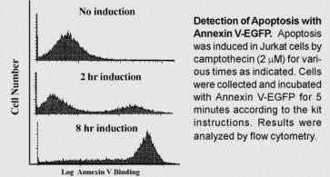 Annexin V-EGFP Apoptosis Kit