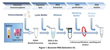 TotalExoRNA™ Overall exosome immunocapture and RNA extraction kit (Biological Fluids/Cell Media)