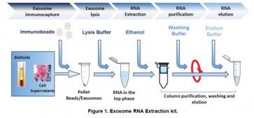 TumorExoRNA™ Tumor-derived exosome immunocapture and RNA extraction kit (10 reactions)