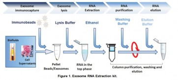 BasicExoRNA™ Basic RNA extraction kit (Pre-isolated exosomes)