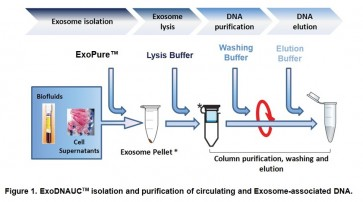 ExoDNAUC™ Circulating and Exosome-associated DNA Extraction Kit (Urine/Cell Media, 20 reactions)