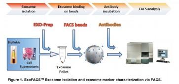 ExoFACS™ Kit for Cell Culture Media Exosomes