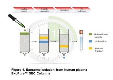 ExoPure™ Chromatography Columns