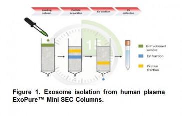 ExoPure™ Mini Chromatography Columns