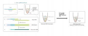 Express CRISPR sgRNA Synthesis Kit
