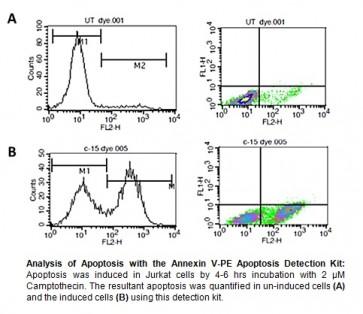 Annexin V-PE Apoptosis Detection Kit