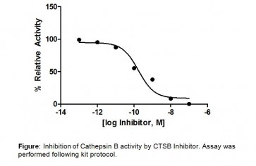 Cathepsin B (CTSB) Inhibitor Screening Kit (Fluorometric)