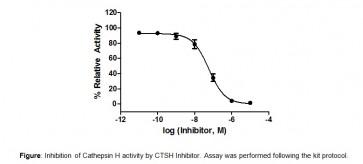 Cathepsin H Inhibitor Screening Kit (Fluorometric)