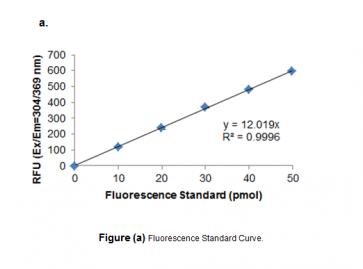 3' to 5' Exonuclease Activity Assay (Fluorometric)