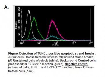 EZClick™ TUNEL – in situ DNA Fragmentation/Apoptosis Assay Kit