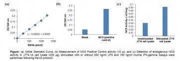 Nitric Oxide Synthase (NOS) Activity Assay Kit (Colorimetric)