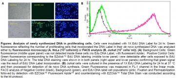 EZClick™ EdU Cell Proliferation/DNA Synthesis Kit (FACS/Microscopy), Green