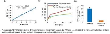ATPase Activity Assay Kit II (Colorimetric)