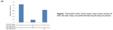 pCREB Transcription Factor Activity Assay Kit (Colorimetric)
