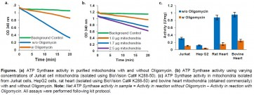 Mitochondrial ATP synthase Activity Assay Kit (Colorimetric)