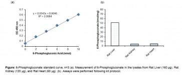6-Phosphogluconic Acid (6-PGA) Assay Kit (Colorimetric)