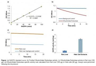 Dihydrofolate Reductase Activity Kit (Colorimetric)