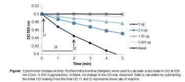 Cytochrome Oxidase Activity Colorimetric Assay Kit