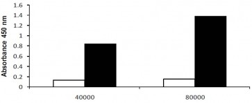 LDH-Cytotoxicity Colorimetric Assay Kit II