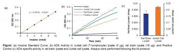 Adenosine Deaminase Activity Assay Kit (Colorimetric)