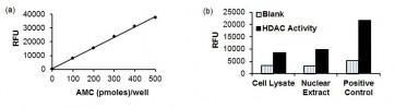 HDAC3 Immunoprecipitation (IP) & Activity Assay Kit